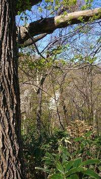 風薫る新緑の中を歩く - Sorekara・・・