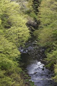 新緑の渓谷へ - 季節のおくりもの