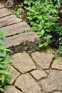 裏庭のグランドカバー - 小さな庭 2