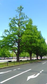 一般参賀行ってきました - (非公式)東京グリーンコーディネータカレッジ 30周年記念ブログ