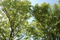緑の賀茂川2019年5月4日 - LLC徒然