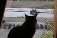 田んぼに水入って、雹が降る - アスタリスク日記