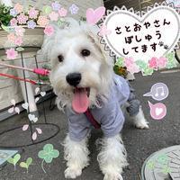 ☆かわいいかわいいまりりんちゃん☆ - らむ動物病院日誌@蓮田市です!