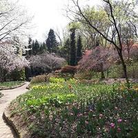 結婚式@韓国 - せらぴすとDiary