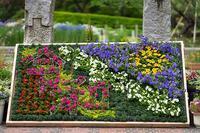 令和元年お祝いムードいっぱいの日比谷花壇大船フラワーセンター - エーデルワイスPhoto