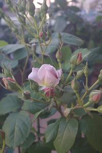 [いおり]開花 - お散歩日和ときどきお昼寝