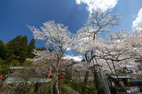 桜巡り2019@京北安楽寺 - デジタルな鍛冶屋の写真歩記