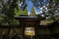 桜巡り2019@京北常照皇寺 - デジタルな鍛冶屋の写真歩記