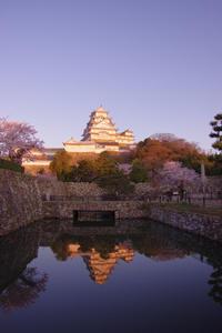 早朝の桜 in 姫路城(2019/4/13)其の③ - 南の気ままな写真日記
