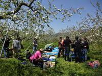 リンゴの花の下でBBQパーティ - 漆器もある生活