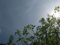 こどもの日の昆虫館~青空とこどもたちの歓声と~ - こどもとむしの秘密基地:佐用町昆虫館