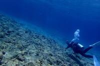 19.5.5祭り - 沖縄本島 島んちゅガイドの『ダイビング日誌』