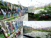 紫川鯉のぼりまつり - EVOLUTION
