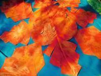 地球とサンゴのハワイアンキルト - eri-quilt日記3