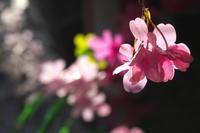 造花(4cut)静岡市 -     ~風に乗って~    Present