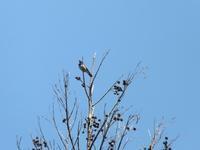 春の匂い - じょんのび