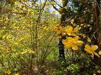 5月の庭の花々 - 風路のこぶちさわ日記