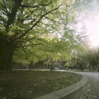 Accumulation of light -銀杏の頃- - jinsnap(weblog on a snap shot)