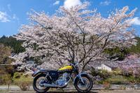 バイクは楽し!!YAMAHA SR400 -53- 🌸 - ◆Akira's Candid Photography