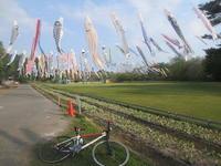 自転車のある風景73   鯉のぼり - じてんしゃでグルメ!3