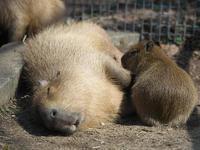 盛岡市動物公園 - morioka暇人日記2