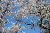 Spring light - SCENE