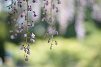 初夏?尾張旭市城山公園を散歩 - 岳の父ちゃんの PhotoBlog