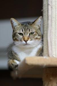 猫タワーのカエデ - BCM Second