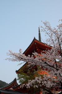 京都観光、定番の清水寺は桜もお見事 - カマクラ ときどき イタリア