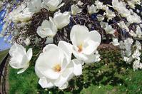 5月5日今日の写真 - ainosatoブログ02