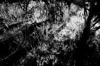 kaléidoscope dans mes yeux2019半径500メートルの情景#76 - Yoshi-A の写真の楽しみ