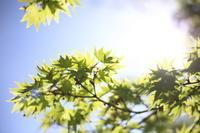 新緑が美しい - 相模原・町田エリアの写真サークル「なちゅフォト」ブログ!