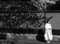 おもかげ(illusion sous un cerisier) - ももさえずり*紀行編*cent chants de chouette