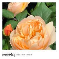 秘密の花園 バライベント - mypotteaセンチメンタルな日々with photos5