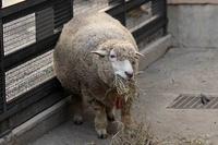 「ベル&アリス」と「クッキー&チョコ」(井の頭自然文化園 September 2018) - 続々・動物園ありマス。
