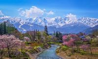 2019.5.3村の春(白馬村大出公園) - ダイヤモンド△△追っかけ記録