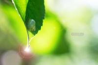 緑のカタツムリ - 続 いまともフォト通信
