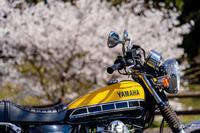 バイクは楽し!!YAMAHA SR400 -54- 🌸 - ◆Akira's Candid Photography