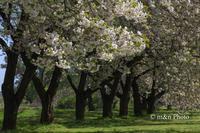 北信越へ(春)1 - 季節のおくりもの