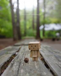 森のお散歩♪ - ぽとすのくずかご