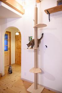 猫グッズ、春の衝動買いまつり3タワー編 - 猫と夕焼け