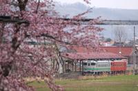 春の昼下がり - 根室線の四季*