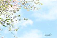 **5月の空に** - こころいろ*photo