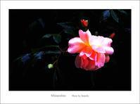 雨のち晴れ - Minnenfoto