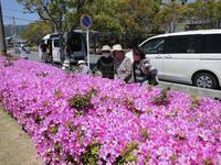 GWに満開な花は……(^o^) - ときの杜『散策日記』(穂の香/ほのか・あや音/あやね・燈いろ/といろ)