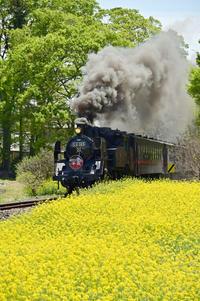 平成から令和へその11 - new 汽車の風景