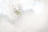 今日のふわラー #407 - ainosatoブログ02