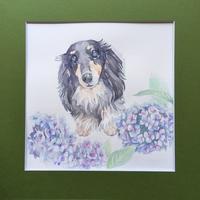 「 Hydrangea 」 - < Eyes of a Dog >