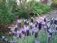ちっとも治らない喉の痛み - natural garden~ shueの庭いじりと日々の覚書き