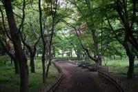 神代の初夏の木陰と野草たち - 柳に雪折れなし!Ⅱ